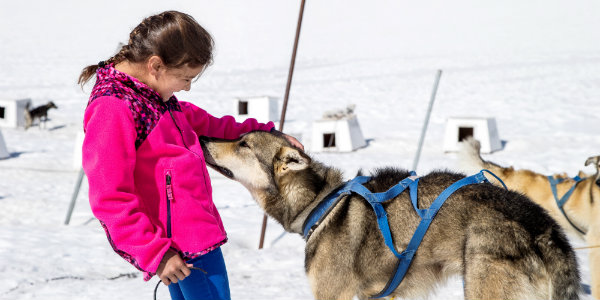 Alaska dog sled tour