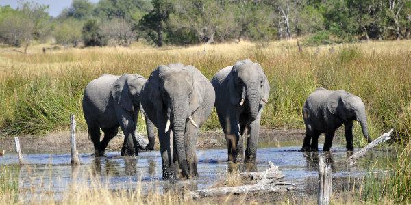 BotswanaOkavangoEdit
