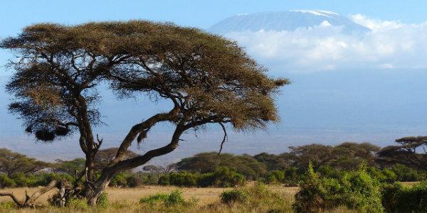 Africa Safari Travel agent tours