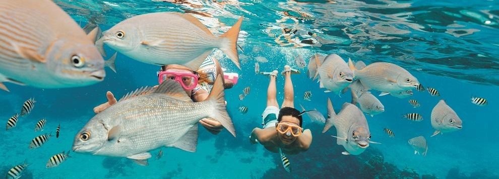 Rci Cozumel Columbia Reef Snorkeling